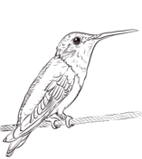 Two Ruby Throated Hummingbirds coloring page Free
