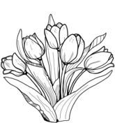 37 Tulpe Zum Ausmalen - Besten Bilder von ausmalbilder