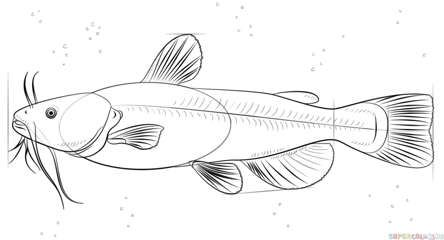 How To Draw A Catfish Step By Step Drawing Tutorials