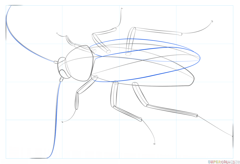 Cockroach: Cockroach Drawing