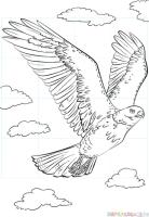 Fliegende Vögel Malen   Vorlagen zum Ausmalen gratis ...