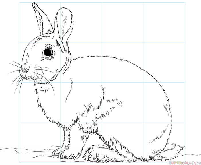 Free Printable Coloring Pages Of Desert Animals