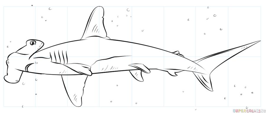 Diagram Hammer Shark Head