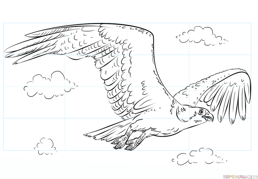 Related Keywords & Suggestions for osprey drawing