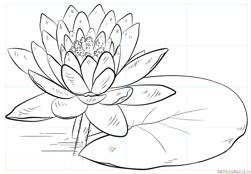lotus in water plant diagram 2003 gmc yukon denali stereo wiring of lily flower data how to draw a and pad step by drawing tutorials parts