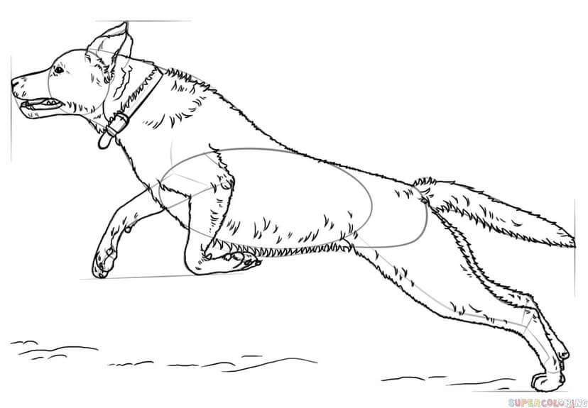 27 Gratis Malvorlage Labrador Beste Malvorlagen