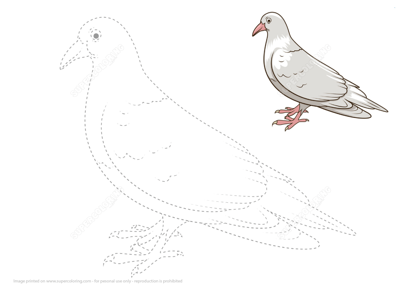 Draw A Pigeon By Tracing Dashed Lines And Color