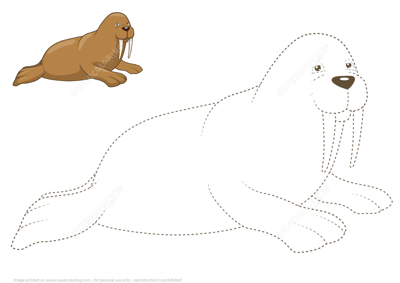 Learn To Draw A Walrus By Tracing Dashed Lines And Color