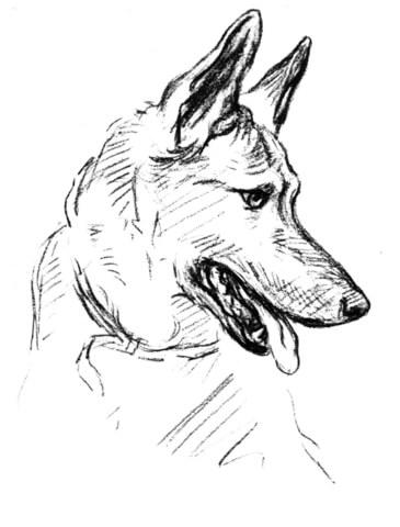 koira värityskuvia