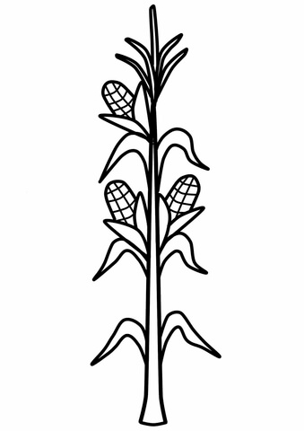 COB COLORING CORN PAGE « Free Coloring Pages