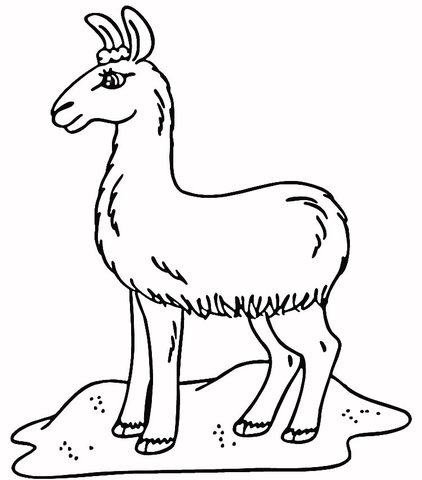 Printable picture of llama for coloring 9jasports