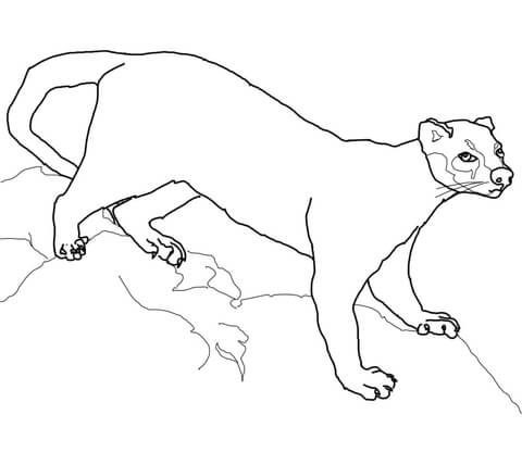 Mongoose Printable Coloring Pages