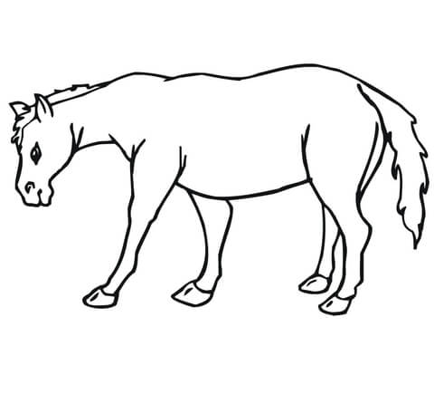 Mule Coloring Page Of Outline A