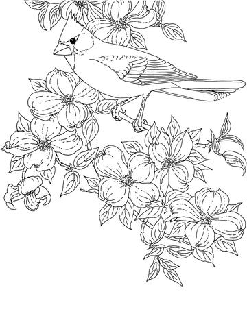 Cardinal Bird and Flowering Virginia State Flower coloring