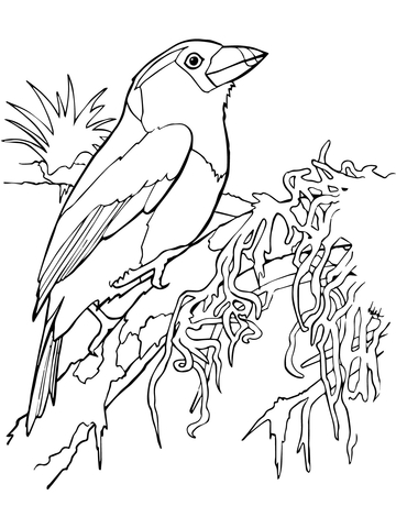 Diagram Of A Toucan, Diagram, Free Engine Image For User