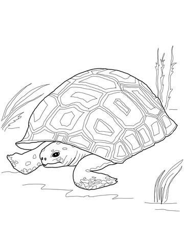 Gopher Printable Coloring Pages