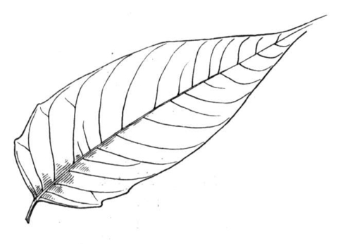 M/palm Leaf Coloring Page Printable Coloring Pages