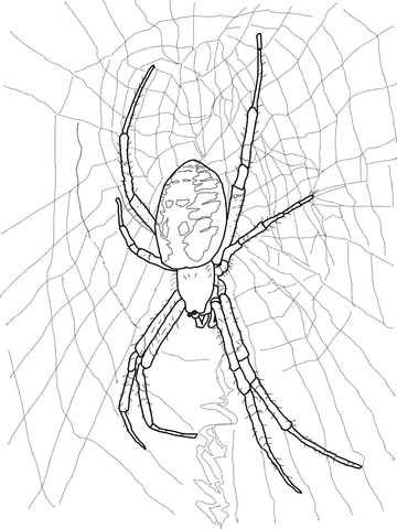 Black and Yellow Garden Spider coloring page