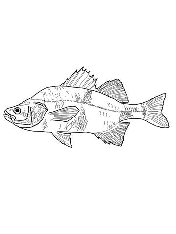 Crappie Fish Coloring Page Sketch Coloring Page
