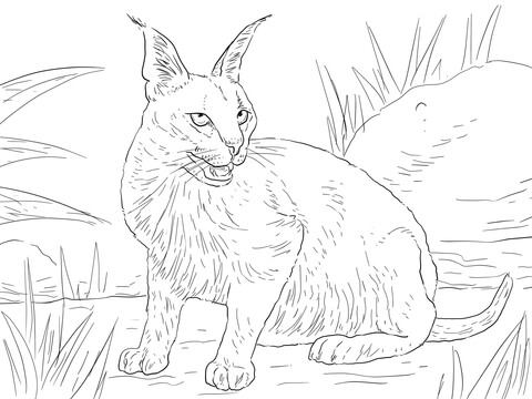 Cute Drawing Polar Bear Wallpaper Android Caracal Desert Wild Cat Coloring Page Super Coloring