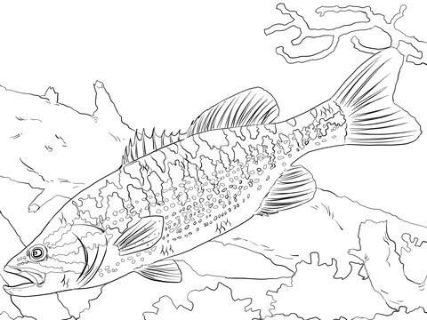 Kleurplaat Piranha Coloriage Requin Carnivore Sur