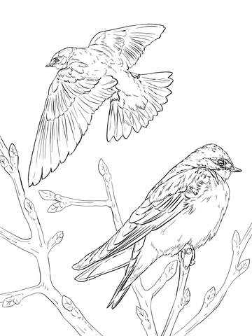 Realistic Tree Swallows Coloring Page