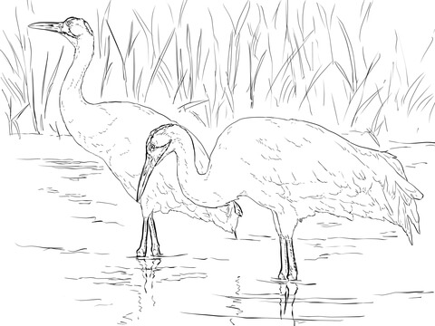 Two Whooping Cranes Coloring Page