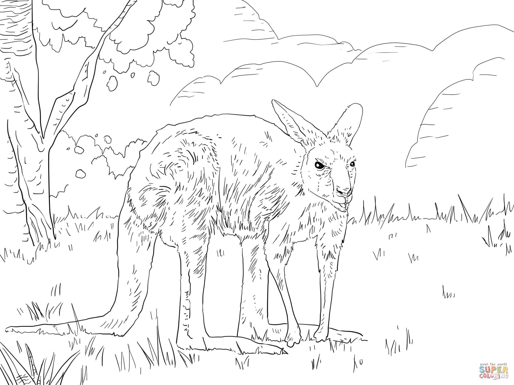Eastern Grey Kangaroo Coloring Online