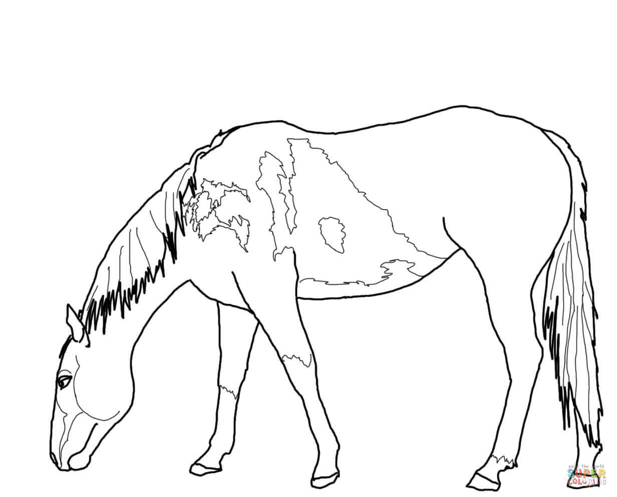 Mustang Horse Outline Coloring Pages