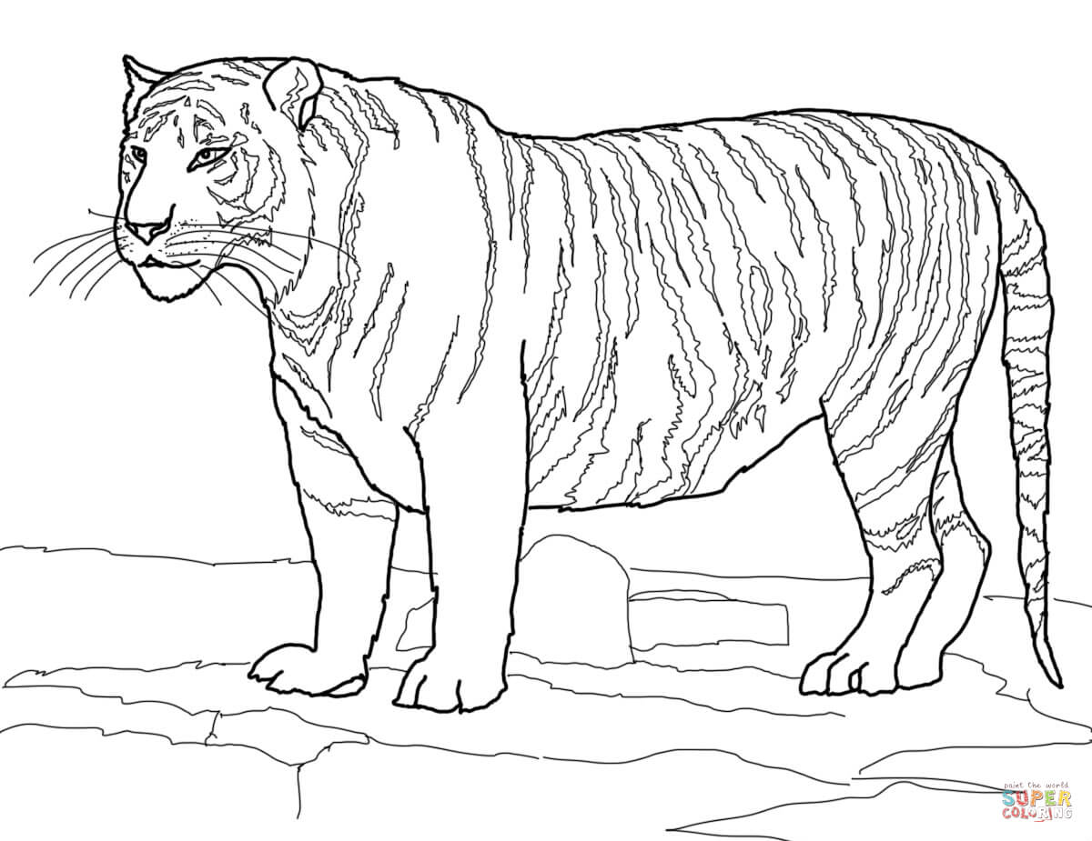 Easy Tiger Face Coloring Pages
