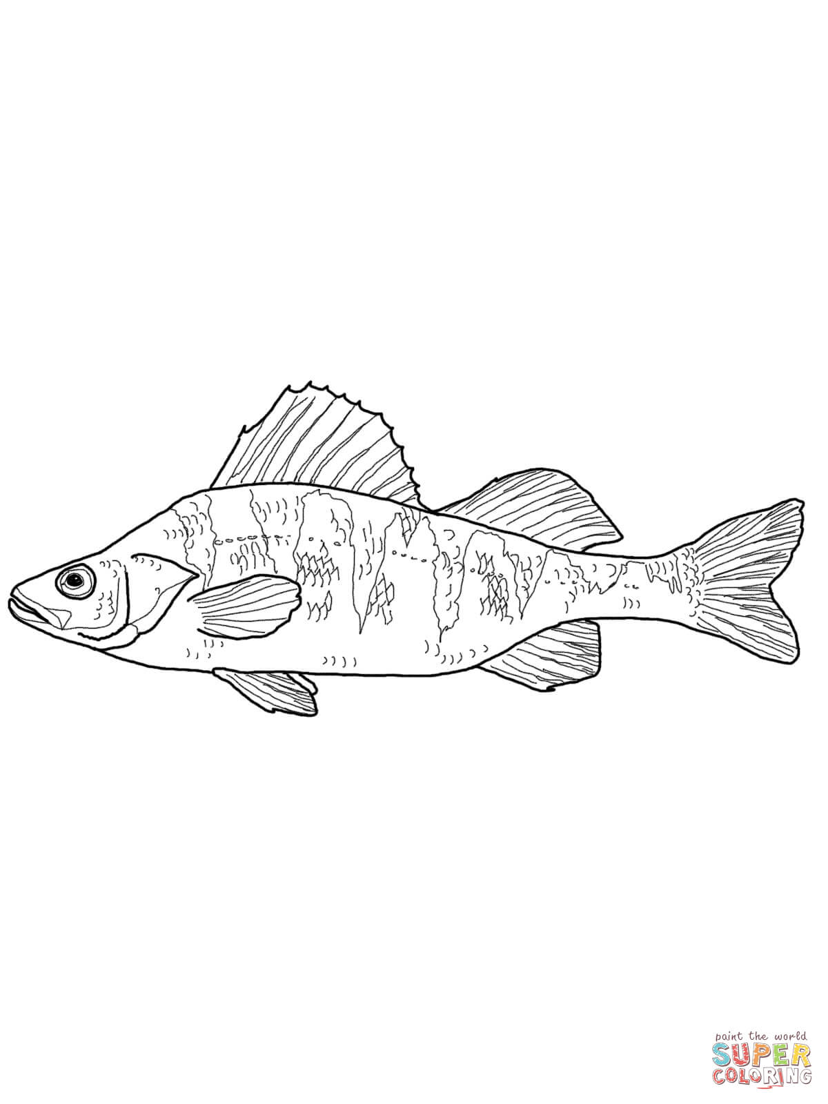 Maryland Yellow Perch Coloring Online