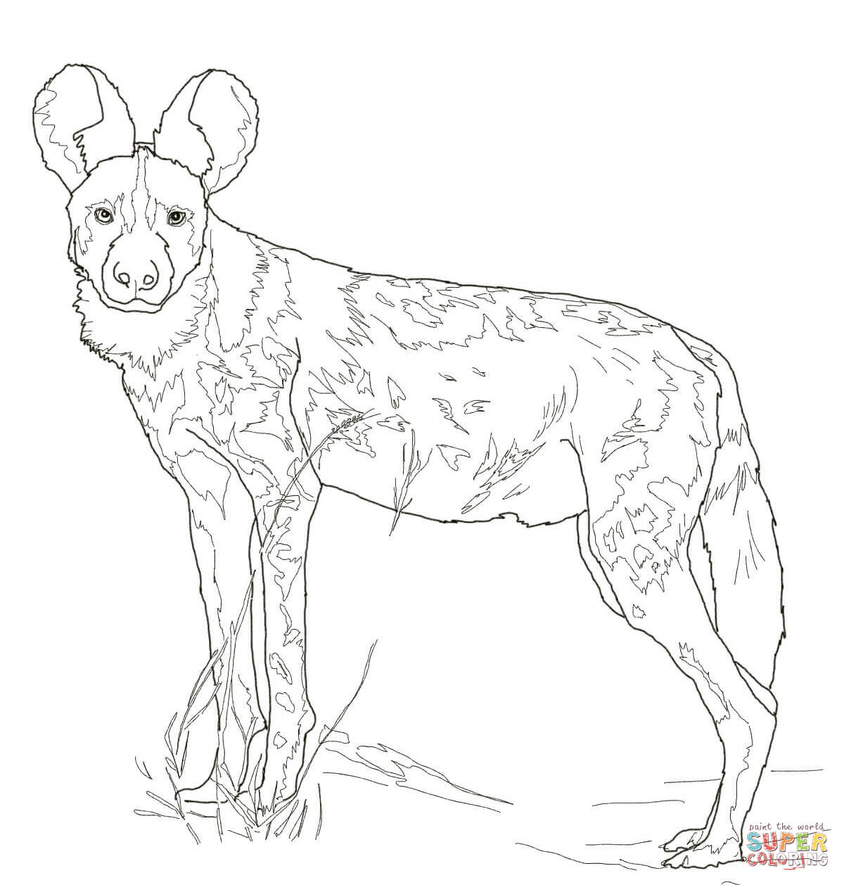 African Wild Dog Coloring Online
