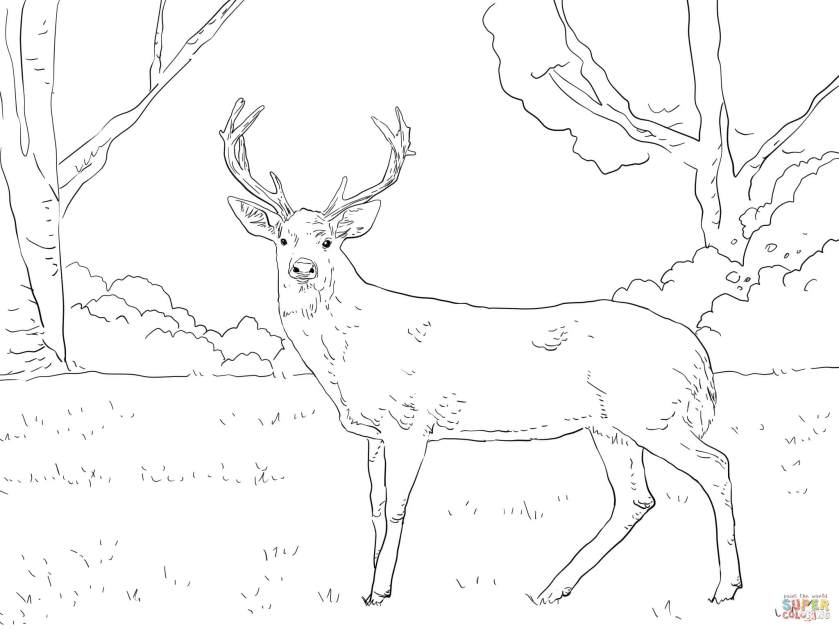 whitetail deer head coloring pages coloring pages