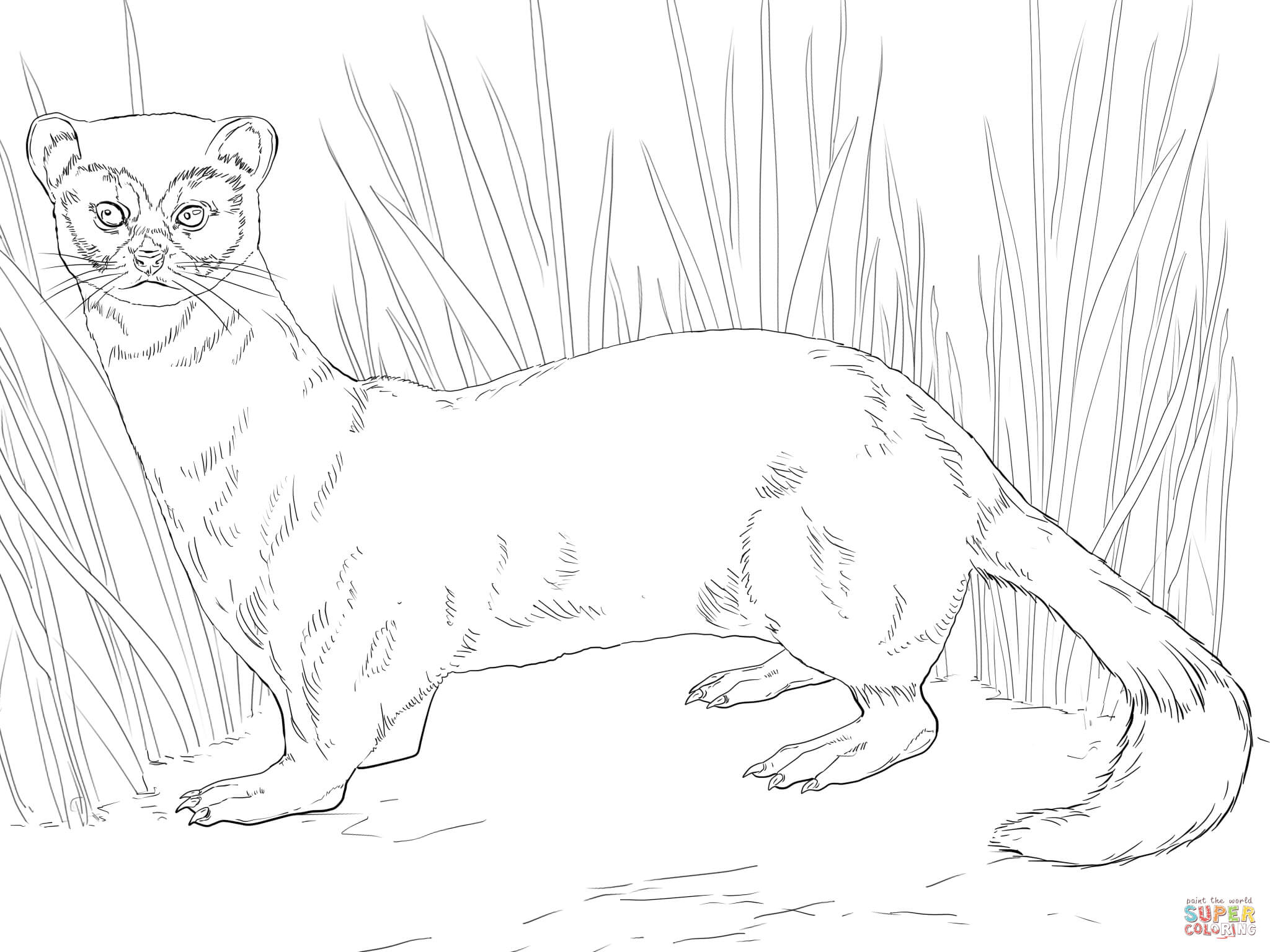 Ferret Coloring Pages Printable