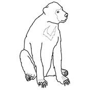 Sun Bear Possesses a Very Long Tongue coloring page