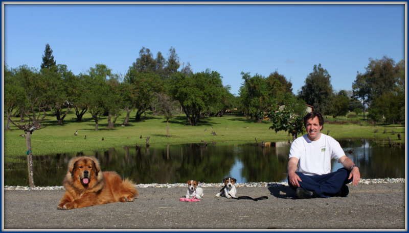 David Baron the Dog Trainer 2012-image.