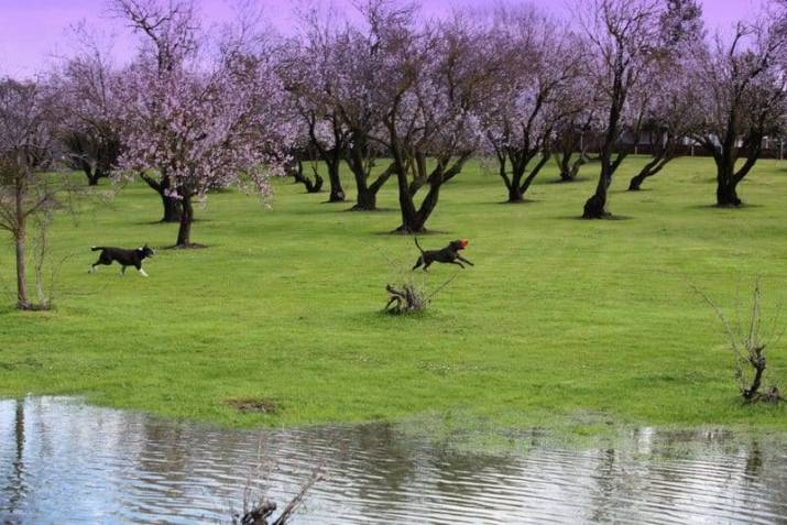 dogs chasing frisbee image