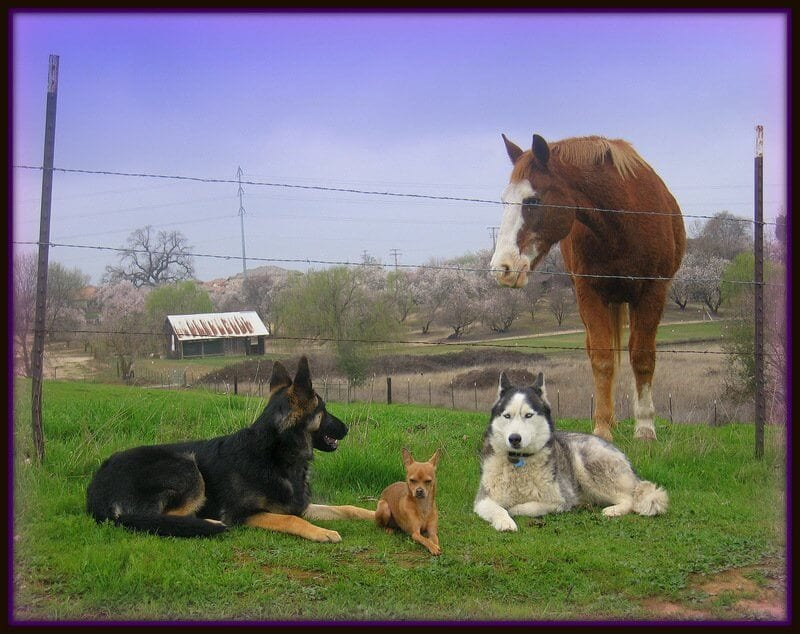 Horse and dogs that are obedience trained to assist those with disabilities