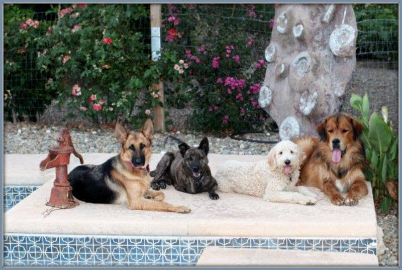 David Baron Dog Trainer image