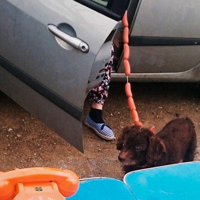 Pas du genre à attacher son chien avec des saucissons de #Lyon