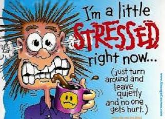 stressihassu
