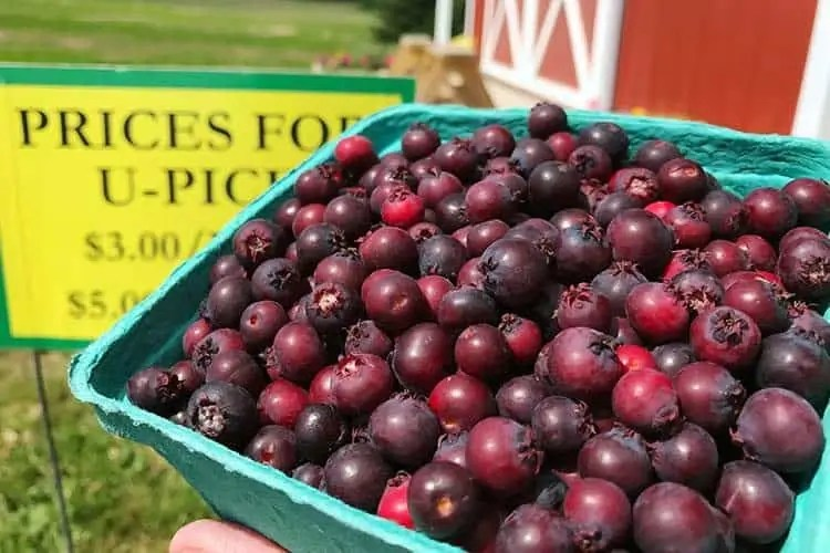 15 highest antioxidant berries