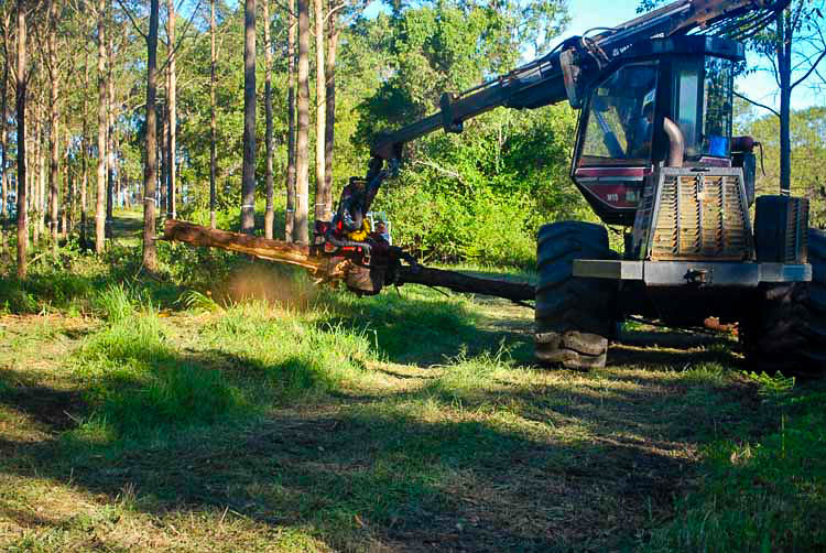 "Mechanical harvester thinning, debarking 11 year old red Mahogany trees, ""Cabbage Palm"" property."