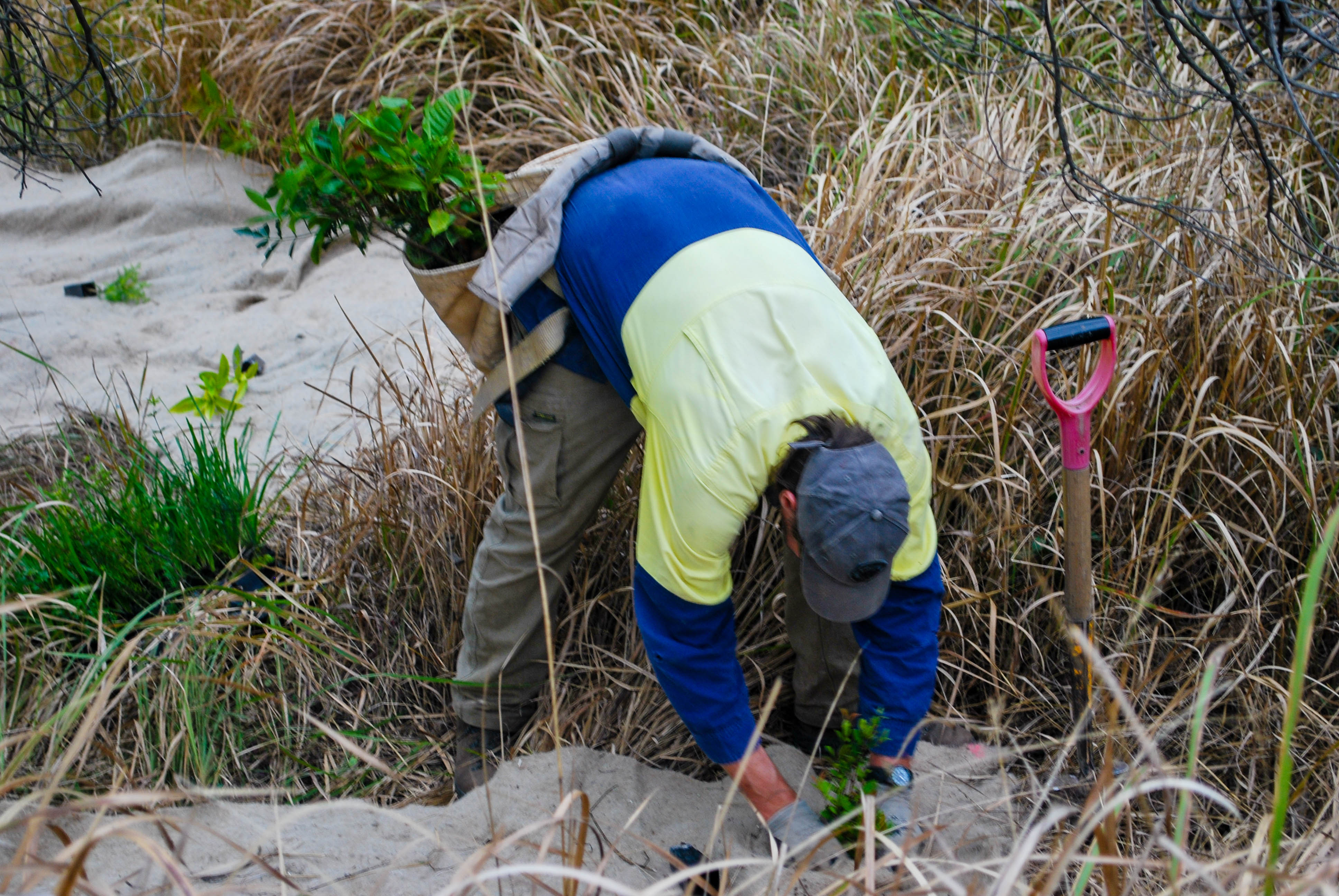 """Bloodwood"" - Environmental planting of indigenous species in Dead Dog Gully Planting."
