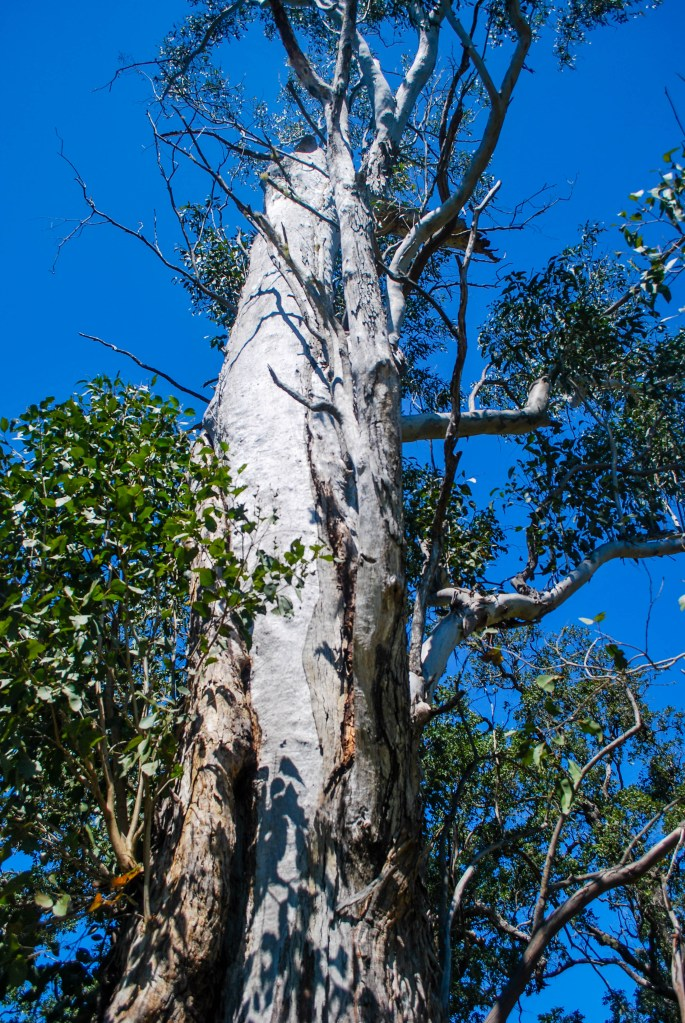 Habitat tree