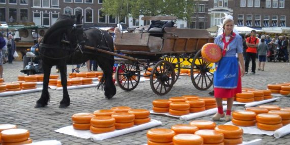 gouda intro - Gouda jeune Hollandais
