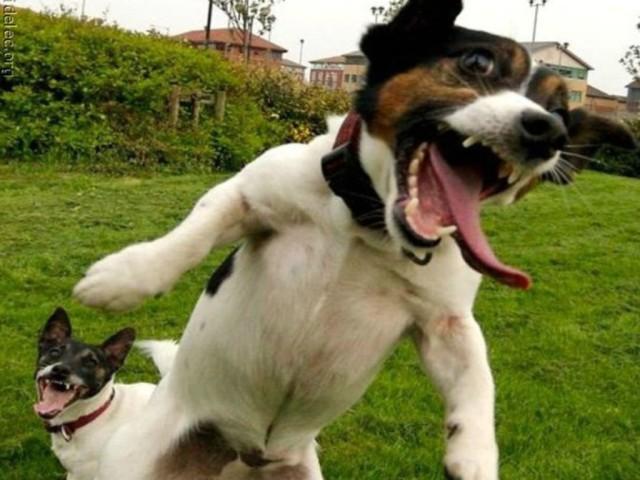 free-crazy-dog-the_122826