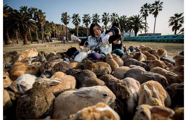 Ōkunoshima-Japans-Rabbit-Island