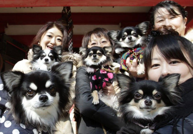 There-are-more-pets-than-children-in-Japan.