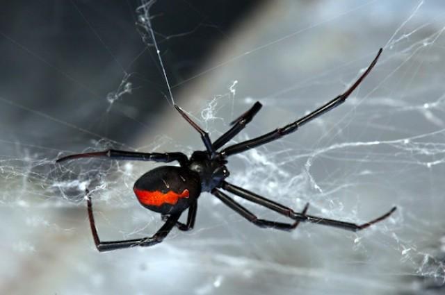 shutterstock_spider